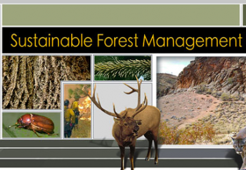 Sustainable Forest Management Open Courses